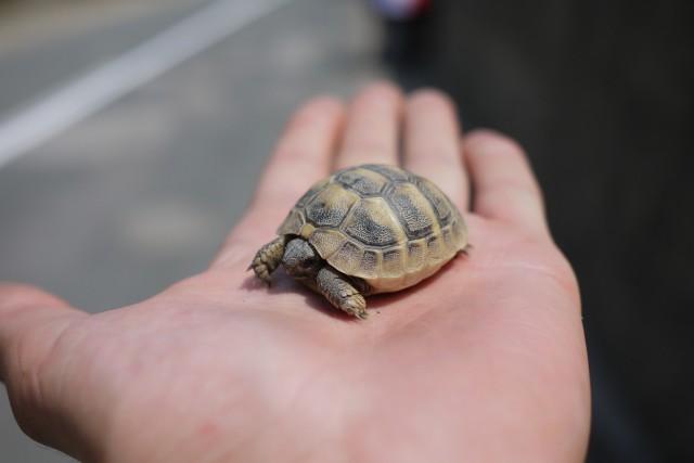 Une tortue en détresse pour Marielle