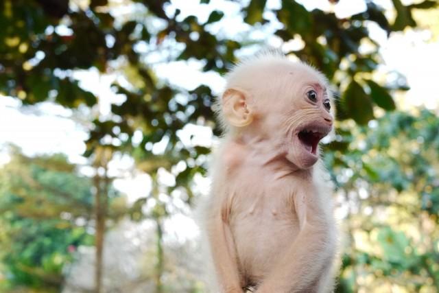 Glandouille avec un singe