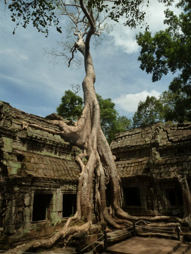 Ta Prohm, le plus sauvage