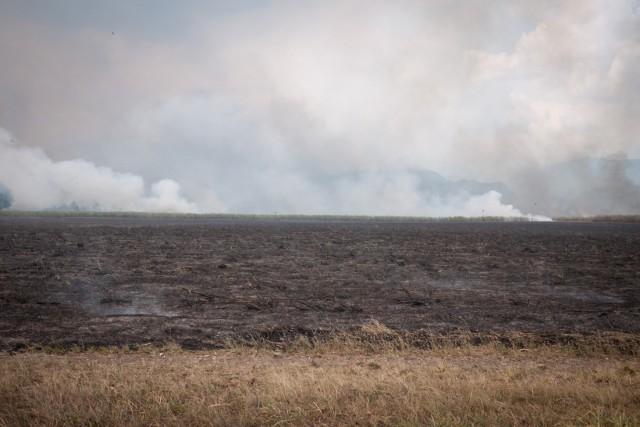 Papouasie Nouvelle Guinée - champs brûlés